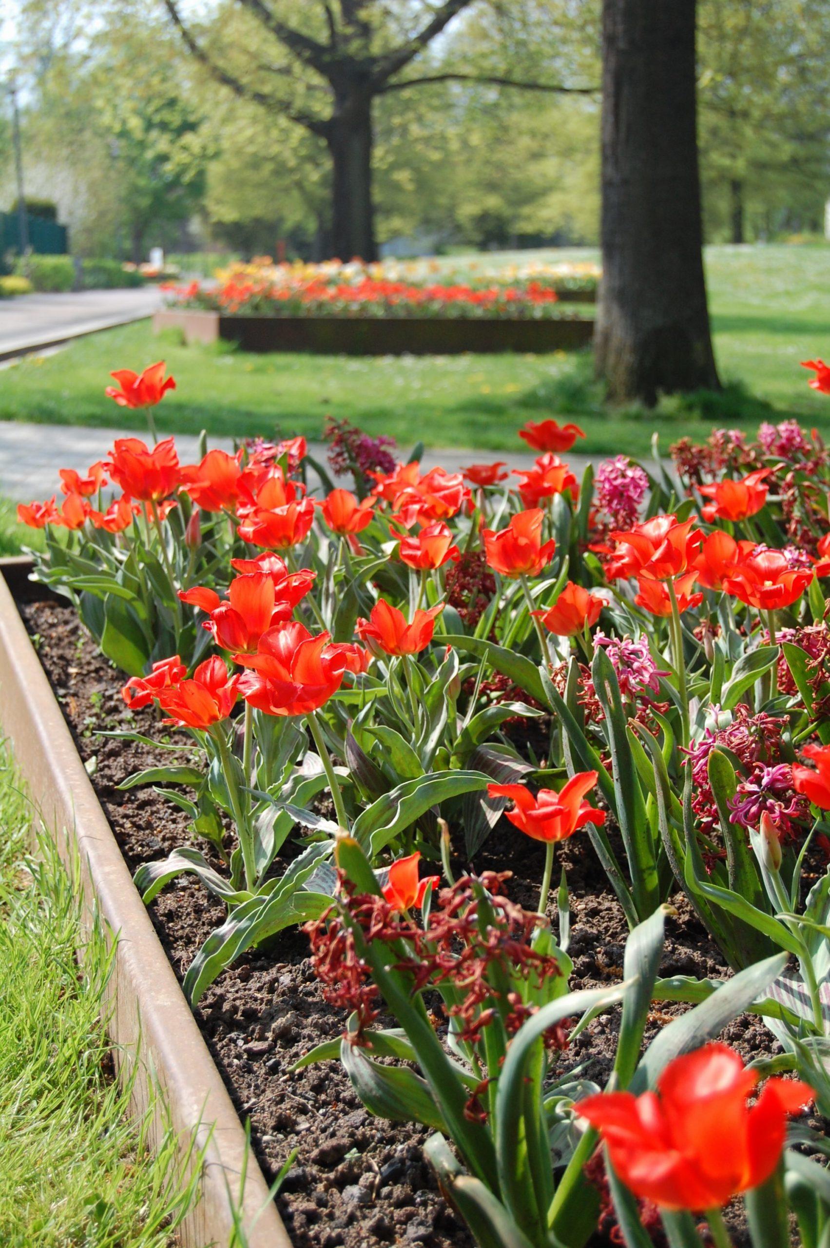 Blumenbeet in Goggo-Rot