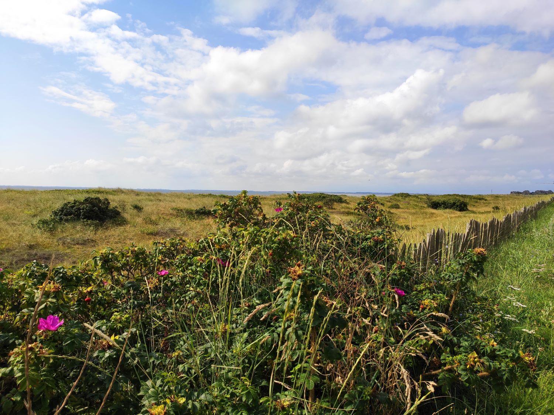 Dünenlandschaft bei List auf Sylt